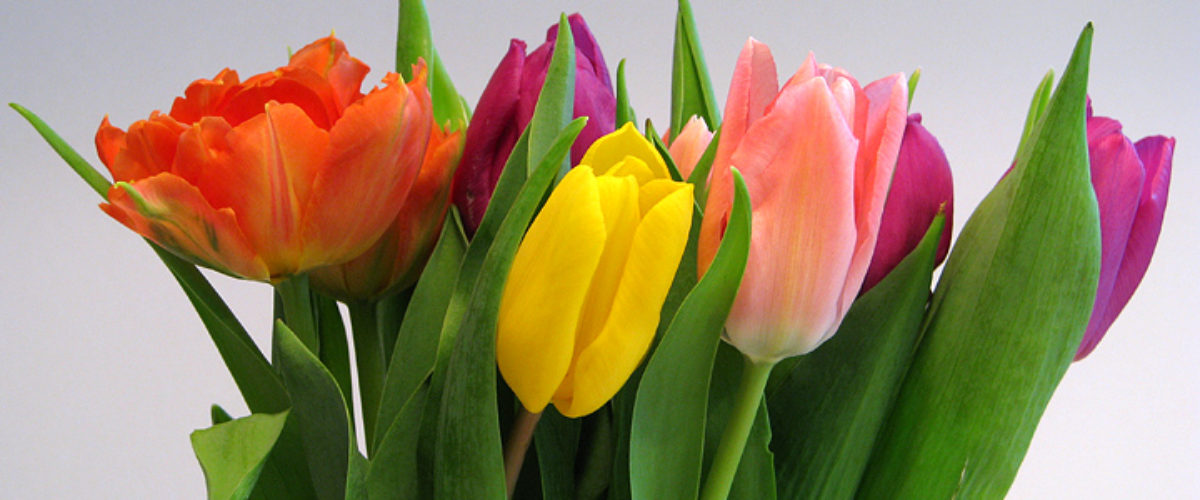 Colors of spring!