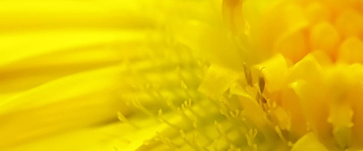Yellow as the sun
