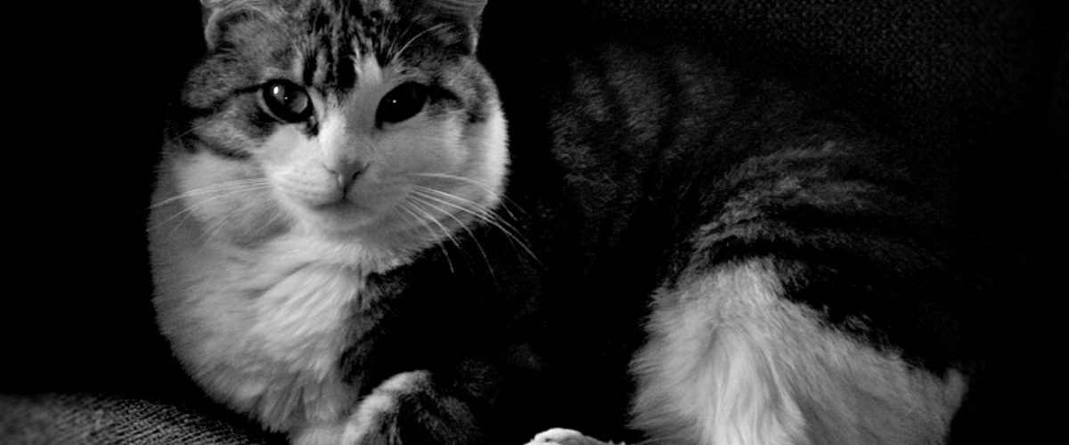 Frasse The Cat