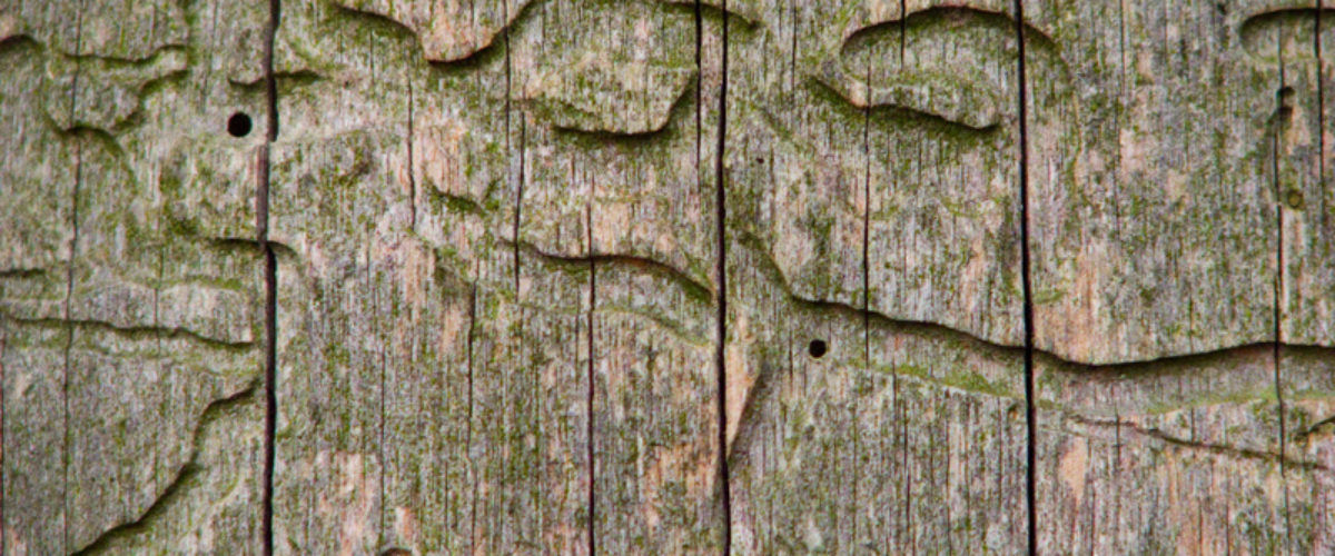 Labyrinth of wood