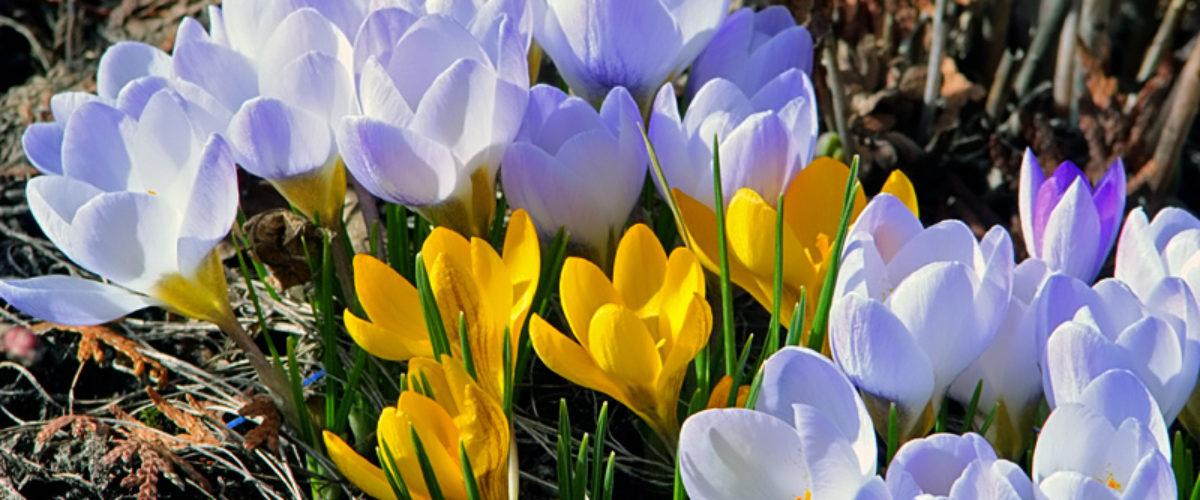 Joy of spring IV