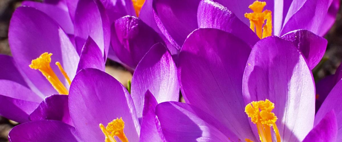 Joy of spring III