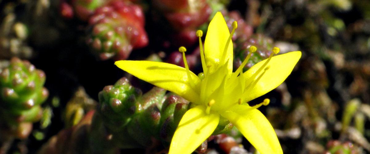 Nature in Miniature - Yellow