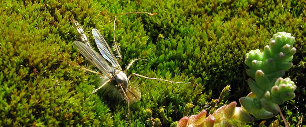 Nature in miniature II