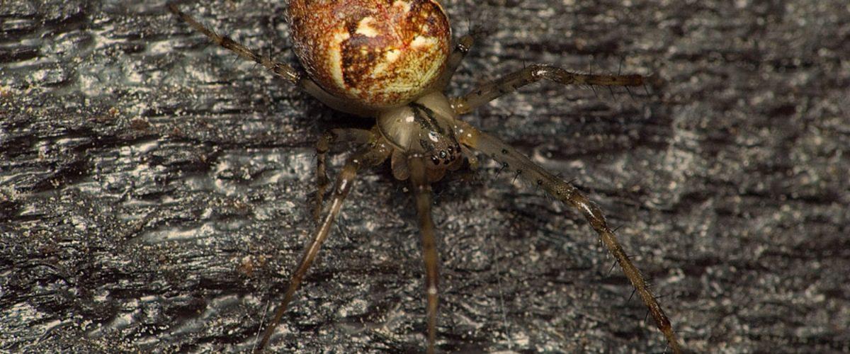 Alert Spider