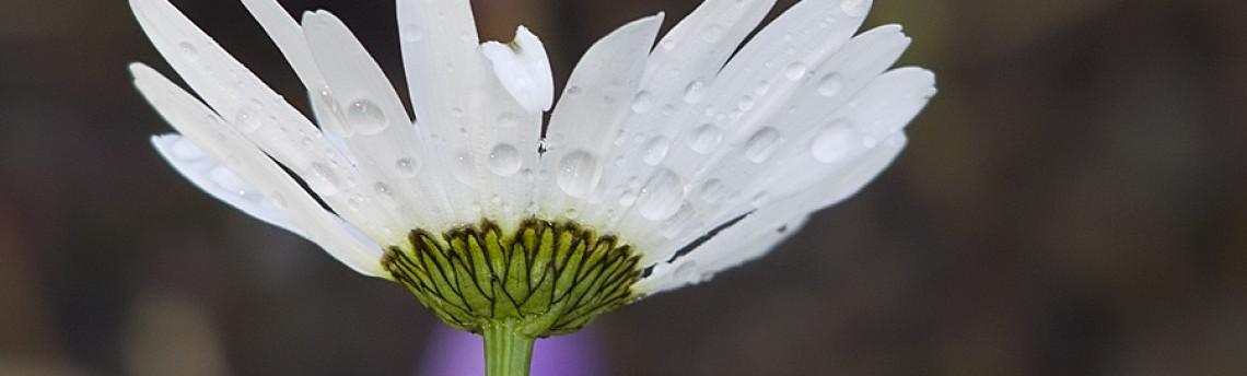 Still in bloom…