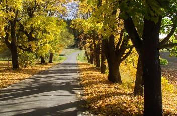Colorful walk