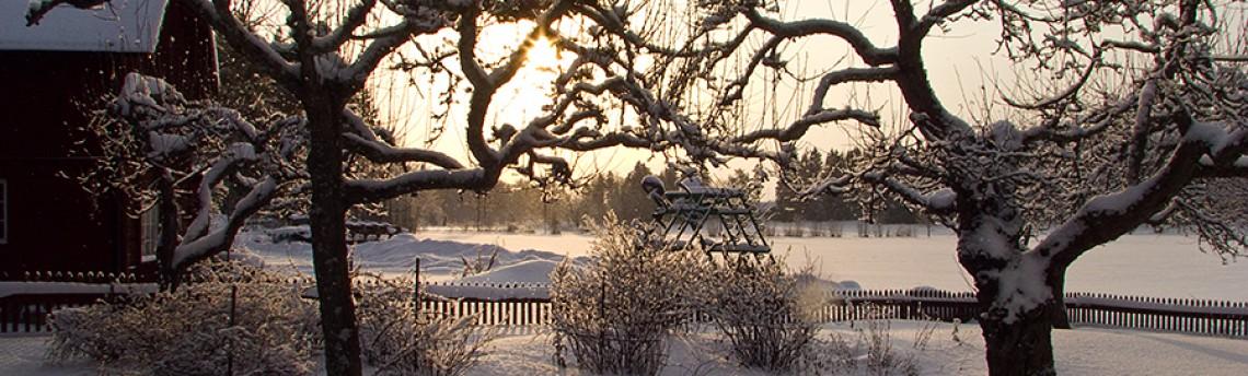 Winter sun…