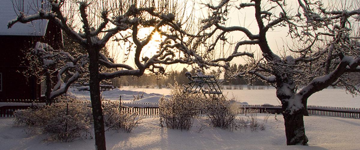 Winter sun...
