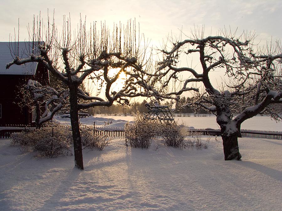 Winter sun
