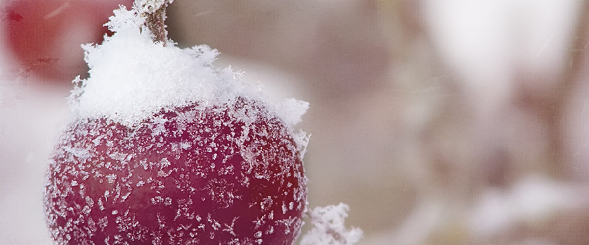 Winter Sweetheart