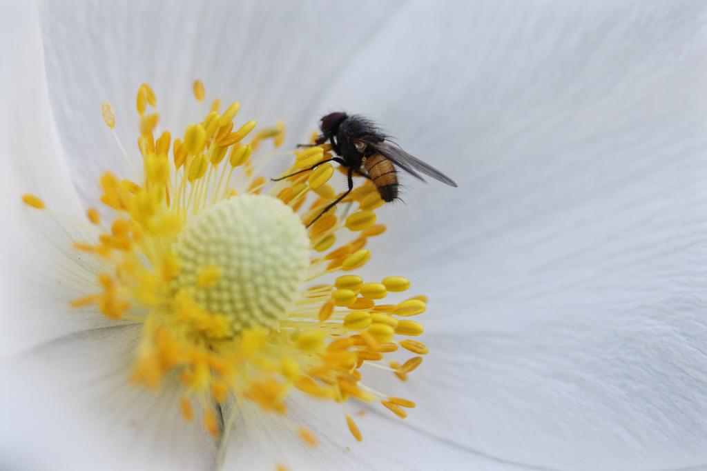 I spy a little fly