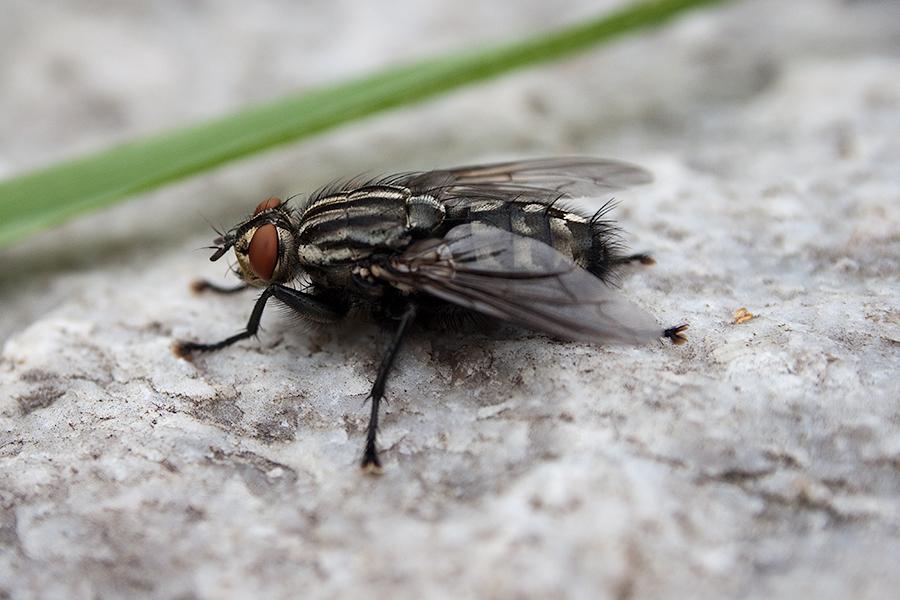 I spy a little fly II