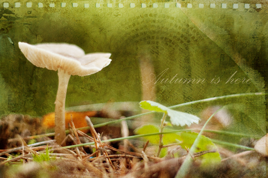 Wordless Wednesday - Autumn is here