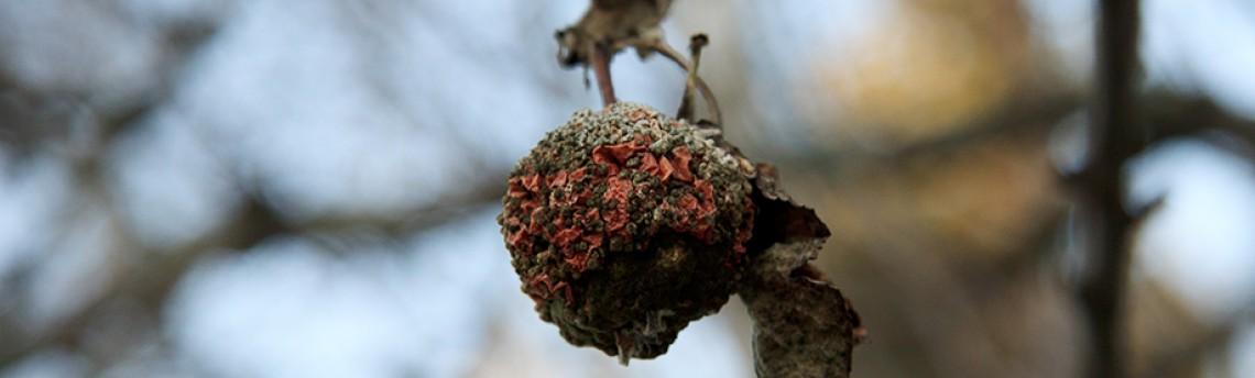 Winter Fruit…