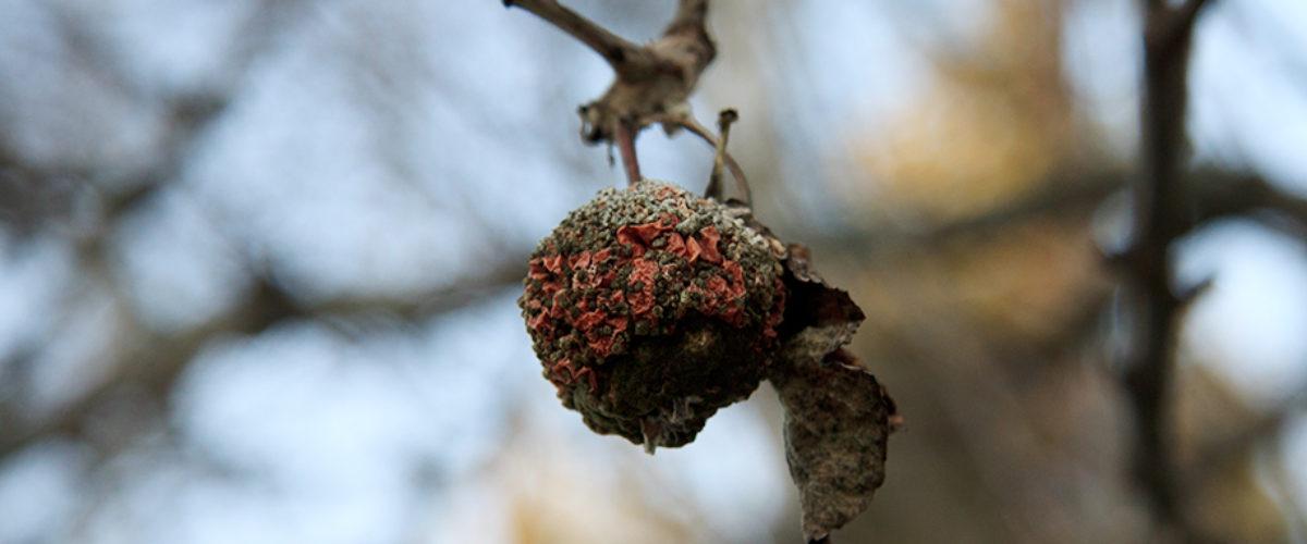 Winter Fruit...
