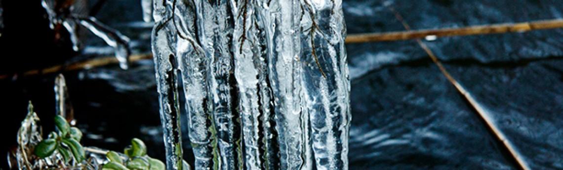 Icy wig…