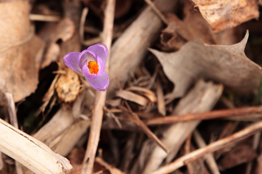 Spot of spring