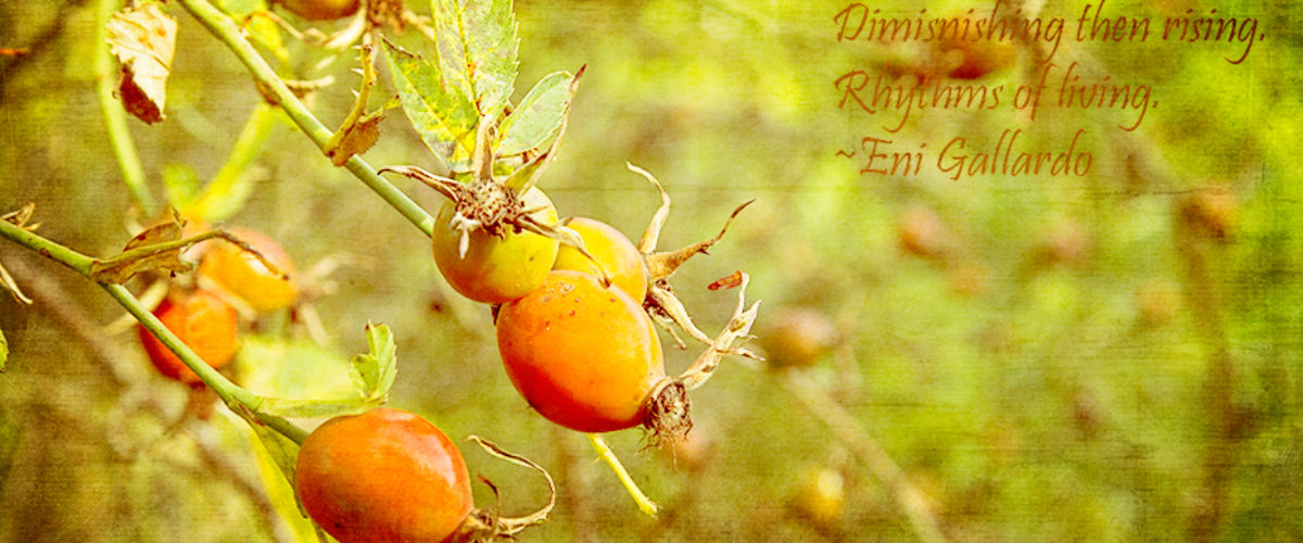 Rose Hip Haiku