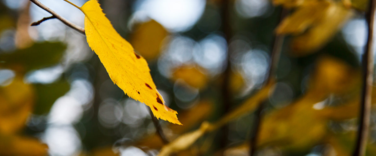 Autumn dreams...