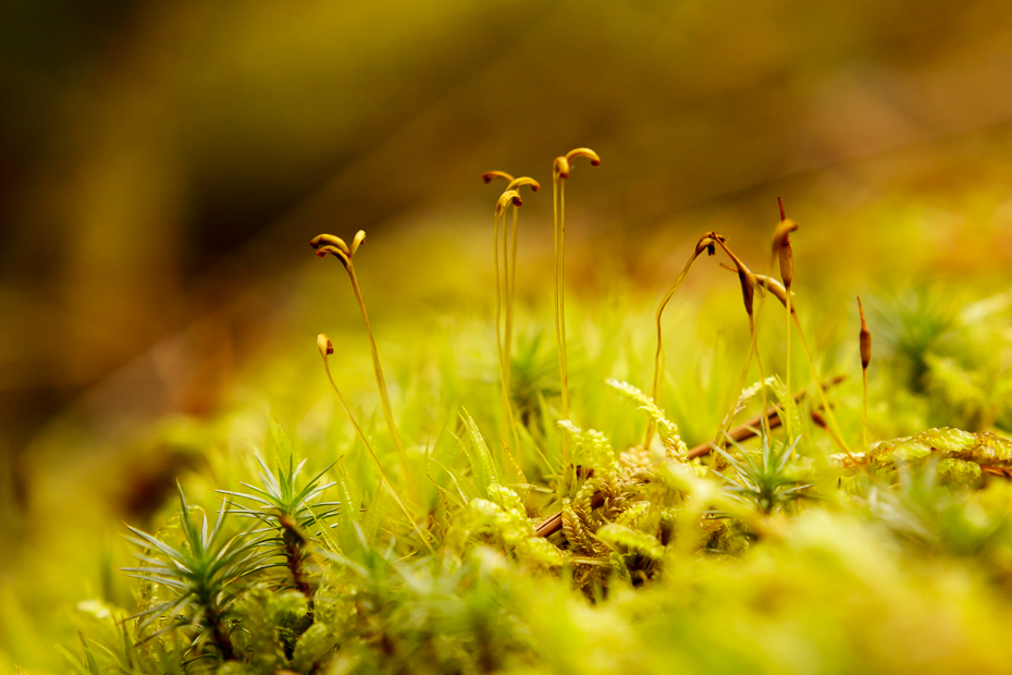 Nature in miniature 9