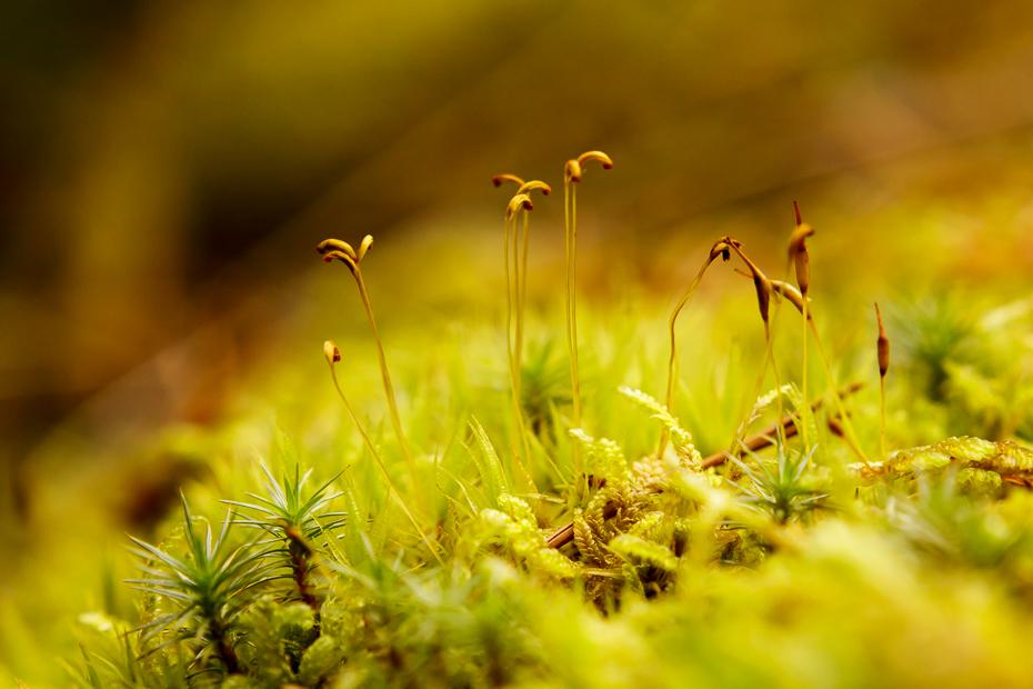 Nature in miniature 9