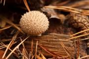 Small pincushion...