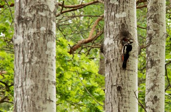The Woodpecker family