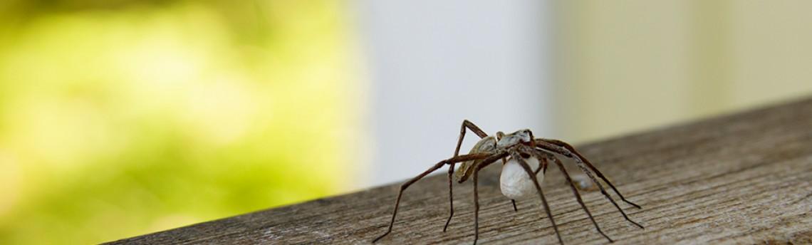 Itsy bitsy spider…