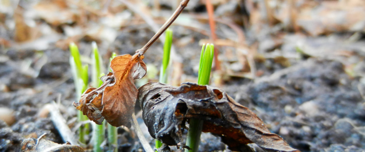 Spring greens vs autumn leaves