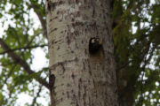 Clean nest